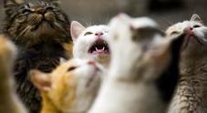 La famiglia padovana che viveva nella casa Ater di 70mq con 40 gatti