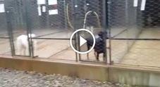 Il video diffuso da Animal Liberation