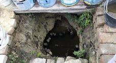 Sequestrato orto tossico dei cinesi: acqua della tangenziale per irrigare