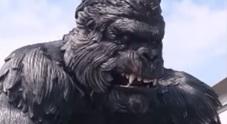 King Kong gigante da un milione di euro dal Veneto alla Tunisia: «Lì almeno ci pagano» /Guarda