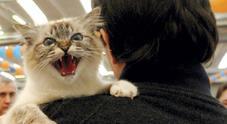 Viene aggredita dal gatto che sembrava impazzito e finisce in ospedale