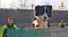Il cane Camilla