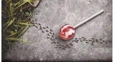 Usi aspartame? Attento: guarda la reazione delle formiche