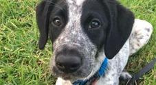 Cucciolo fugge allo scalo e blocca i voli, ucciso: bufera social