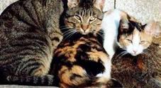 «Aiuto mi hanno ucciso tre gatti avvelenandoli con l'antigelo»