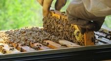 Nasce il primo apiario integrato d'Italia