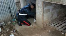 Droga dietro la cuccia del cane: due arresti a Melito   Video