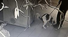 La foto del cane