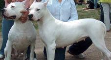 Doghi argentini