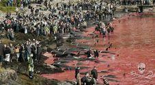 Grind, la mattanza delle balene in Europa (Sea Shepard)