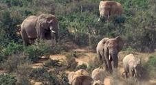 India, elefanti infuriati e killer: quattro persone morte in un villaggio