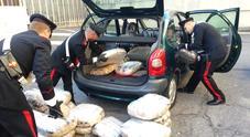 Immagine Roma, sequestrati 37 chili di marijuana in magazzino