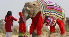 Pigiami extralarge per proteggere gli elefanti del freddo