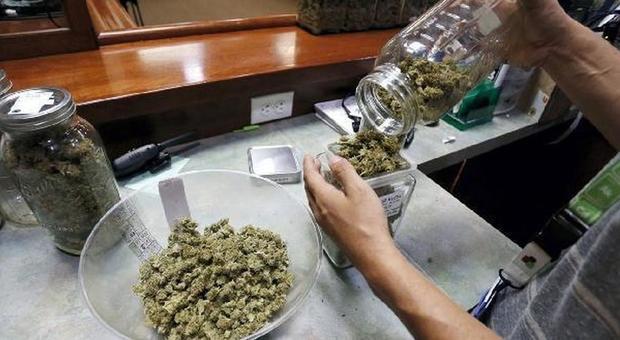 La villa della droga, casalinga arrestata: aveva 18 chili di cannabis