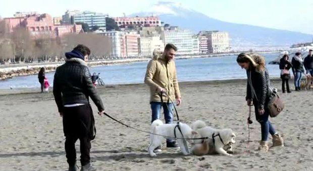 Napoli, il raduno dei cani giapponesi sulla spiaggia della Rotonda Diaz