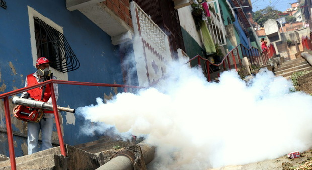 Zika, allarme per i contagi: «Possibili 4 milioni di casi»