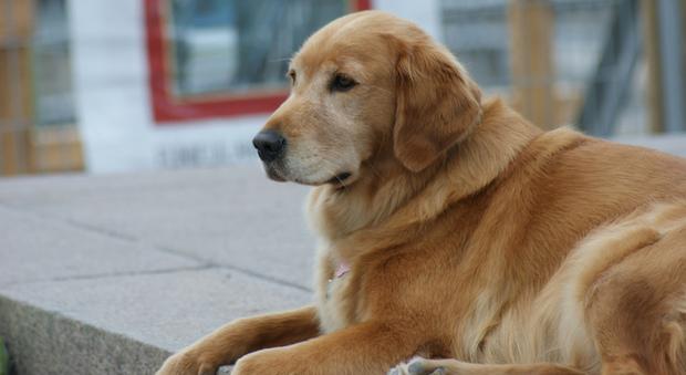 Roma, un cane bruciato e con le zampe amputate in una busta di plastica: scoperta choc