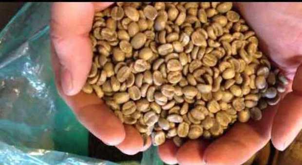Il caffè antiproiettile, l'ultima moda Usa per perdere chili