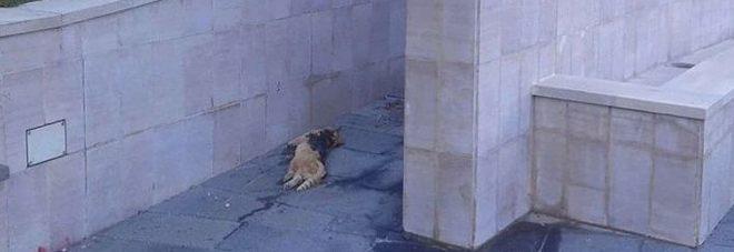 Il gatto ucciso brutalmente a Tortora (CS)