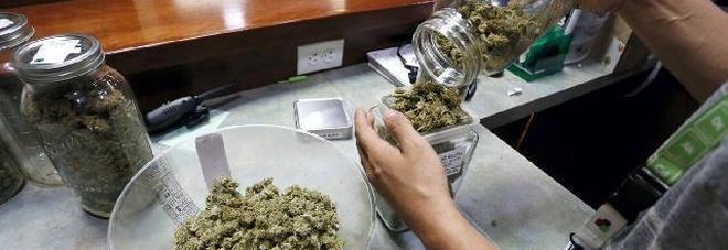 Cannabis curativa in quindici farmacie, iniziate le prime vendite