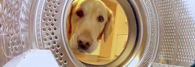 Tortura la moglie, chiude il cane in lavatrice e poi lo impicca davanti ai figli. Padova sotto choc