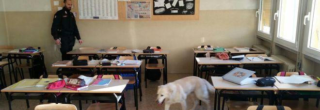 Il cane labrador Falco insieme a un carabiniere controlla un'aula