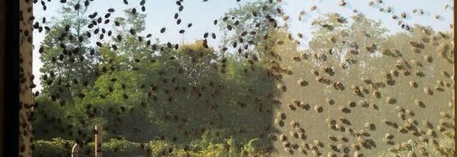 Per la cimice cinese 4 milioni di danni tra frutteti e orti distrutti