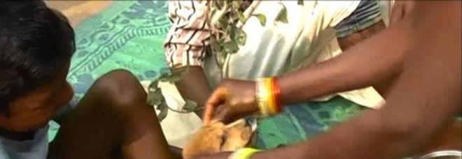 India, il bimbo di 7 anni sposa il suo cane: costretto dalla famiglia, la motivazione choc
