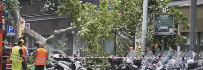 Roma, un albero cade in viale Regina Margherita