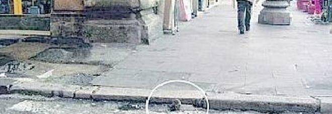 Roma, è emergenza topi: sono due per abitante. Pronta un'ordinanza, vertice con il governo
