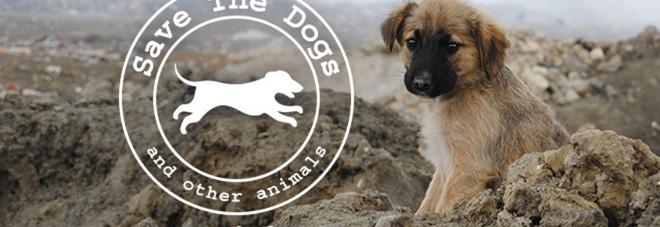 Al via la raccolta fondi per la più grande clinica per cani e gatti randagi