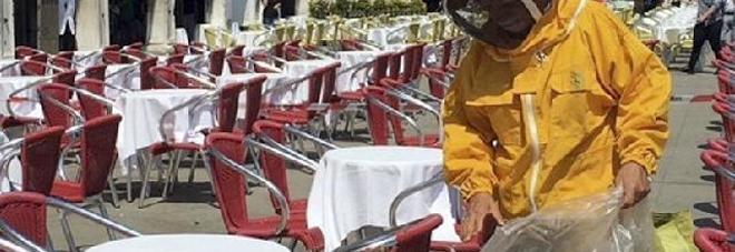 L'apicoltore si è portato via la sedia invasa dagli insetti