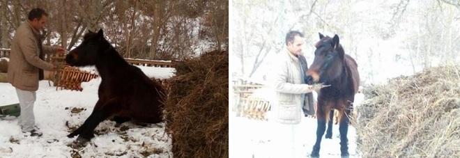 Rimasto solo dopo il sisma e intrappolato nella neve: cavallo salvato ad Arquata
