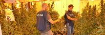 """Ideò la """"villa della droga"""", 5mila piante di marijuana nelle stanze: arrestato 55enne /Foto"""