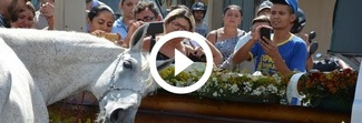 Fantino muore in un incidente, il suo cavallo piange sulla bara