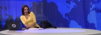 Il cane entra in studio durante la diretta, la conduttrice del tg è terrorizzata Video