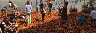 Piazza San Silvestro ricoperta da piume colorate: la sorpresa fa impazzire i turisti e i passanti