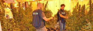 """Ideò la """"villa della droga"""", 5 mila piante di marijuana nelle stanze: arrestato 55enne"""