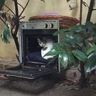 Se il forno abbandonato per la strada diventa una cuccia per randagi