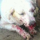 Una statua ad Angelo, il cane simbolo delle crudeltà contro gli animali