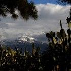 Il Vesuvio ghiacciato   Foto