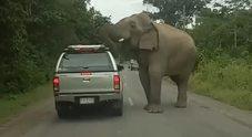 L'elefante si avvicina all'auto e quello che succede è incredibile