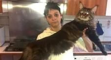 Il gatto più lungo del mondo è italiano e si chiama Barivel
