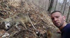 Salerno, lupo morto sul Cervati:  la verità dall'autopsia sulla carcassa