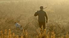 Cane da caccia cammina  sul fucile e spara al padrone