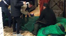 Sequestrati oltre 250 chili di prodotti ittici lungo tutta la costa marchigiana