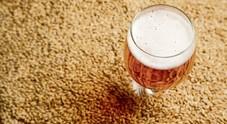Il caldo minaccia la birra: può diventare poca e a prezzo raddoppiato