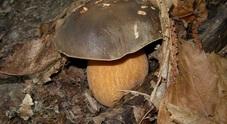 Andar per funghi: profumi e sapori fanno sognare i piatti autunnali