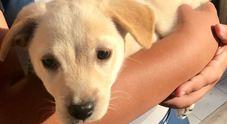 La Guardia di Finanza adotta una cagnolina abbandonata e la chiama Fiamma