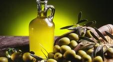 L'olio d'oliva delle Marche ottiene dall'Unione Europea il marchio di qualità Igp
